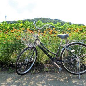 自転車で練習